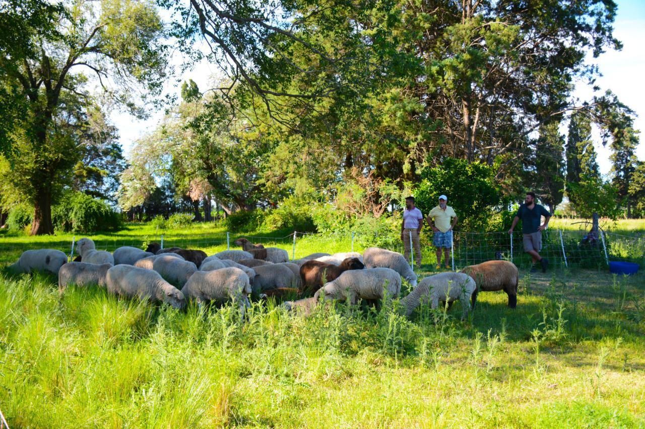 Agroecología: en 4 hectáreas y con un sistema de pastoreo regenerativo realizan la cría de ovinos, producción de huevos y un pensionado equino
